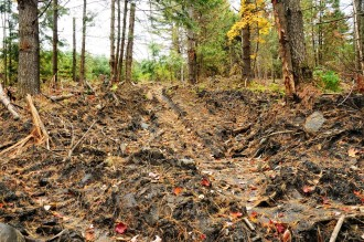 """""""Some of the roads should be smoothed out and seeded and some water bars put in,"""" said Washington County Forester Russ Barrett. Photo by Hilary Niles/VTDigger"""