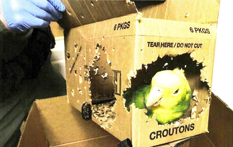 Man accused of illegally smuggling rare birds across Vermont border