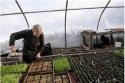 Seed shortage worries farmers, home gardeners